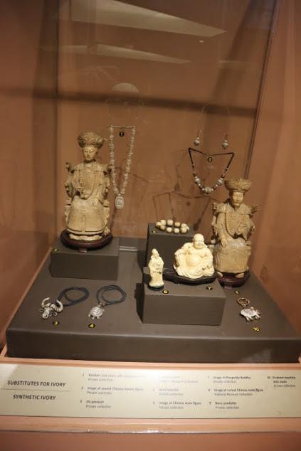 象牙展示中華系