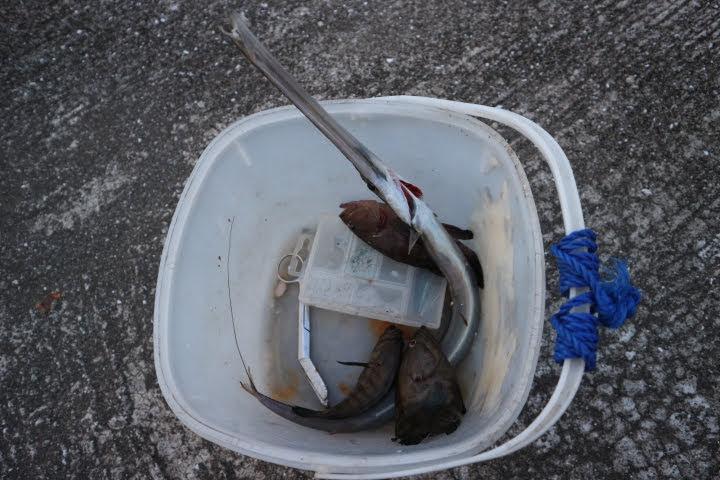コレヒドール魚