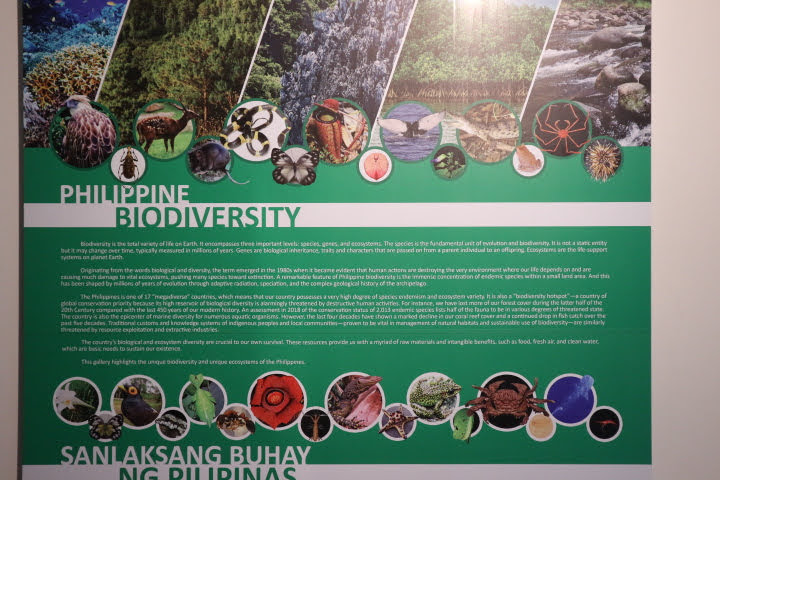 ギャラリー1PhilippineBiodiversity