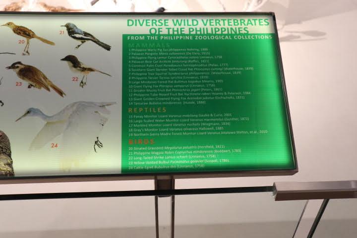 ギャラリー1脊椎動物解説