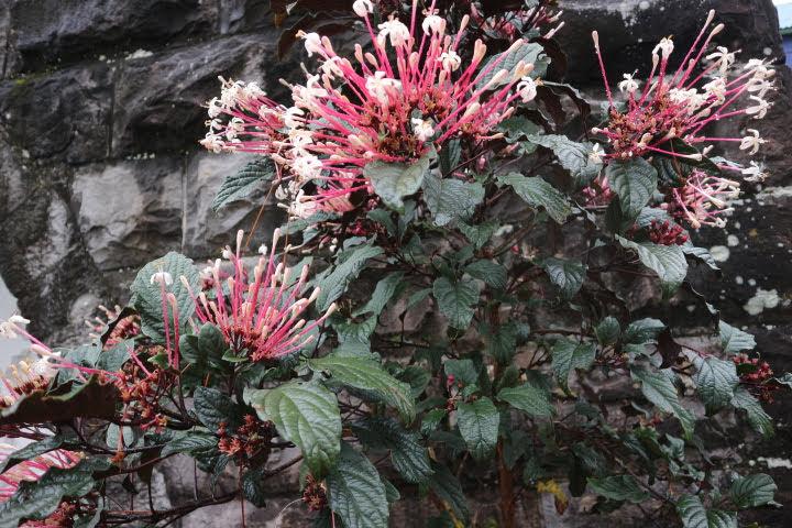 セイントメアリー教会花
