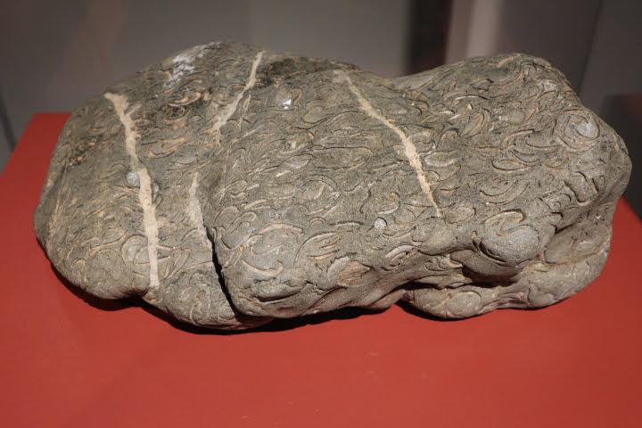 ギャラリー2ジュラ紀化石砂岩