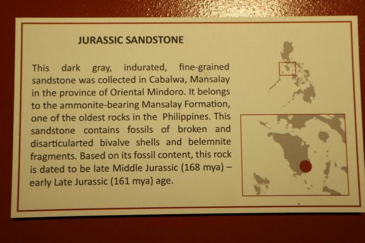 ギャラリー2ジュラ紀化石砂岩解説
