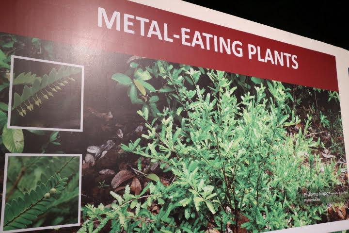ギャラリー3鉱物取り込み植物