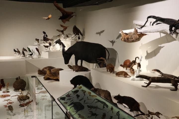 ギャラリー1脊椎動物剥製