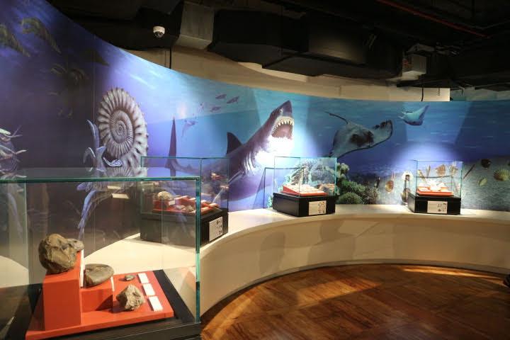 ギャラリー4海の化石