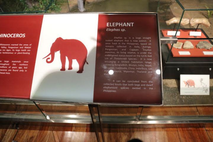 ギャラリー4象化石解説