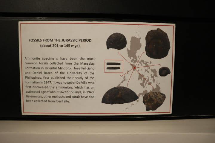 ギャラリー4アンモナイトミンドロ島解説