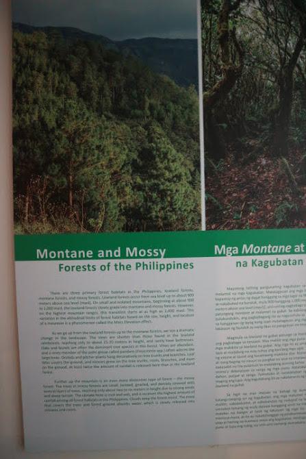 ギャラリー5フィリピン高原森林