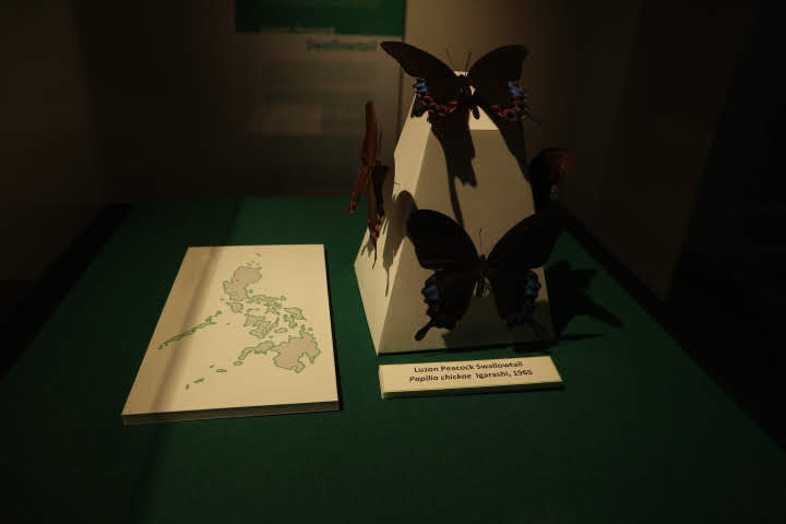 ギャラリー5蝶々