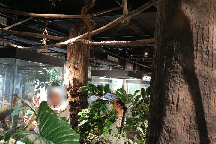 ギャラリー6熱帯雨林模型
