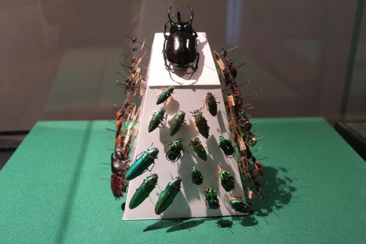 ギャラリー6カブトムシや昆虫