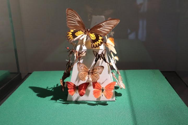 ギャラリー6蝶々