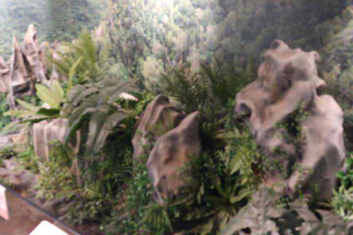 ギャラリー7カルスト林