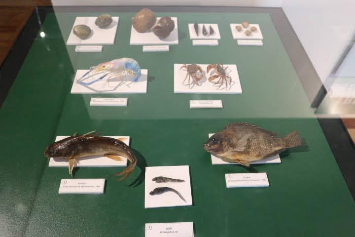 ギャラリー8淡水湿地生物模型