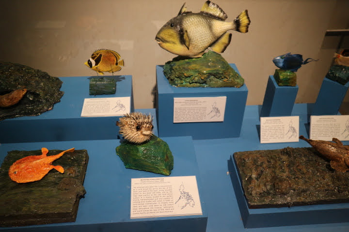 ギャラリー10魚模型