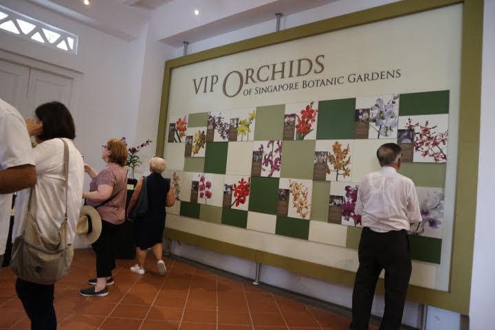 シンガポール植物園オーキッドガーデンVIPオーキッド
