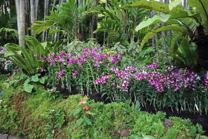シンガポール植物園オーキッドガーデン蘭