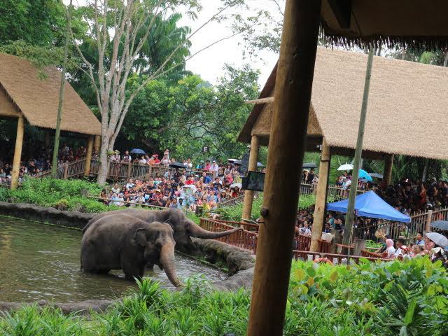 シンガポール動物園象えさやり
