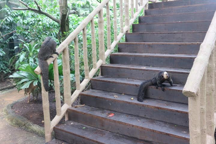 シンガポール動物園さるはなし飼い