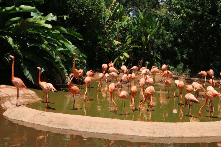 BirdPark-フラミンゴ