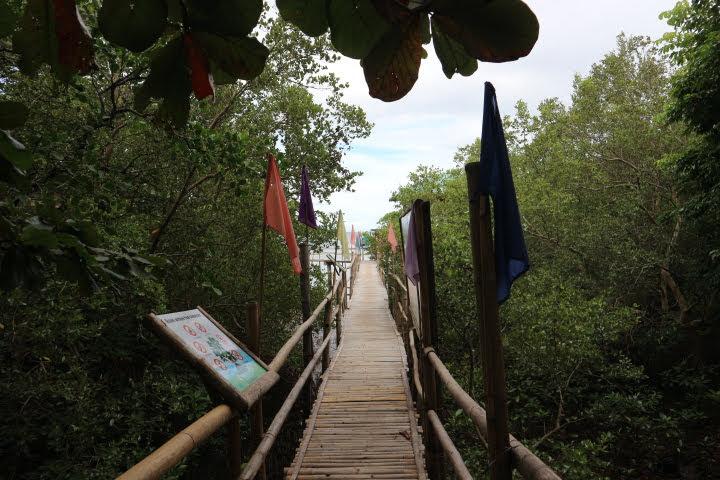 マングローブ保存エリア桟橋