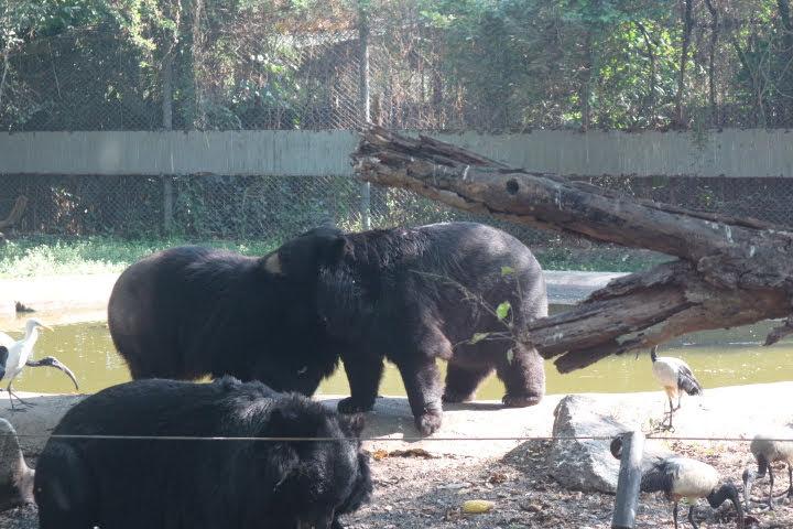 サファリワールド熊さん