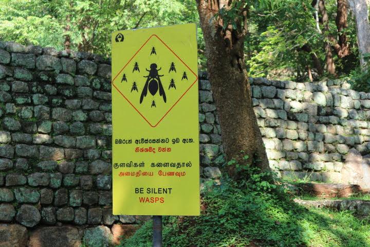 シギリヤロック道中ハチに注意