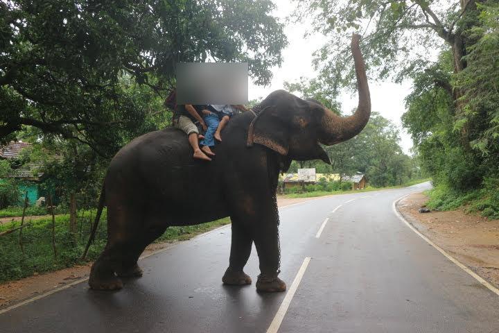 象さんがよそ見