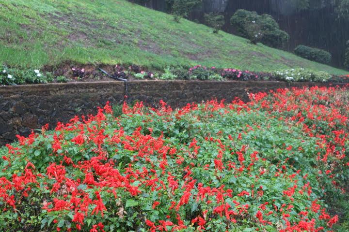 ハッガラ植物園お花