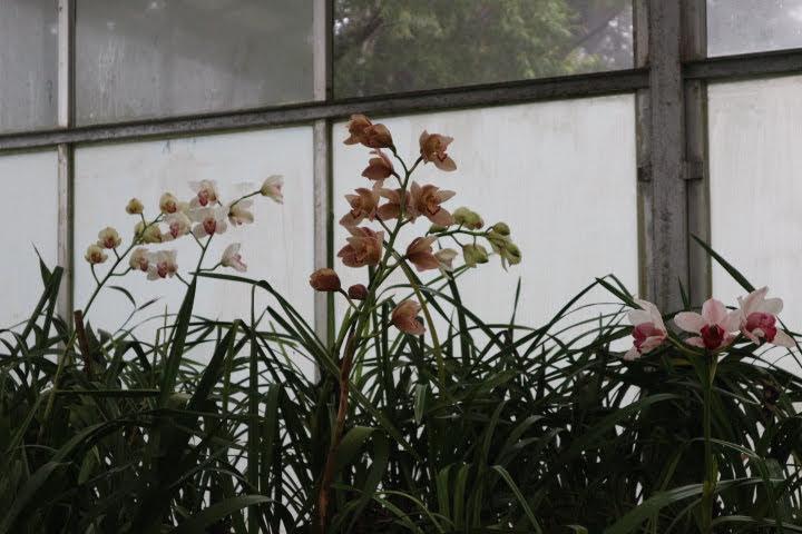ハッガラ植物園蘭