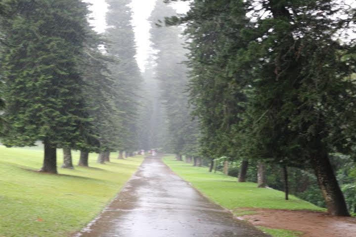 ペラデニア植物園の直線