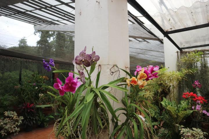 ペラデニア植物園蘭2