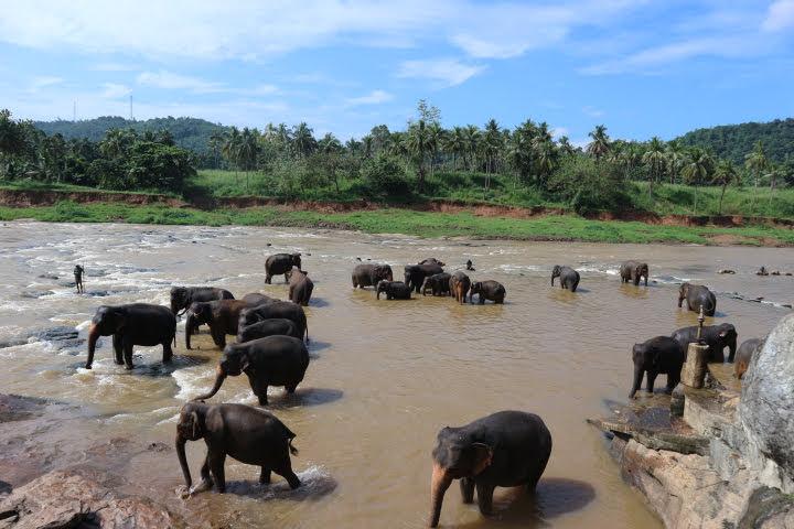 象さん水浴び中