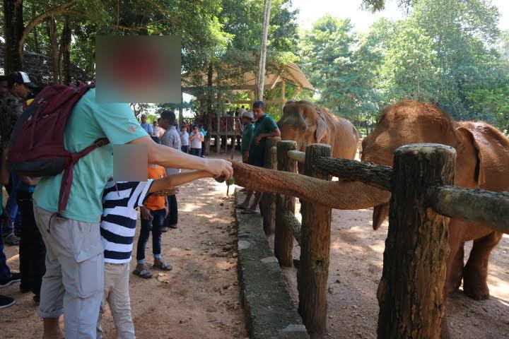 象さんに餌やり