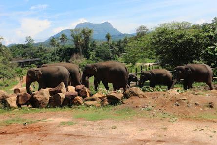 象さん食事中